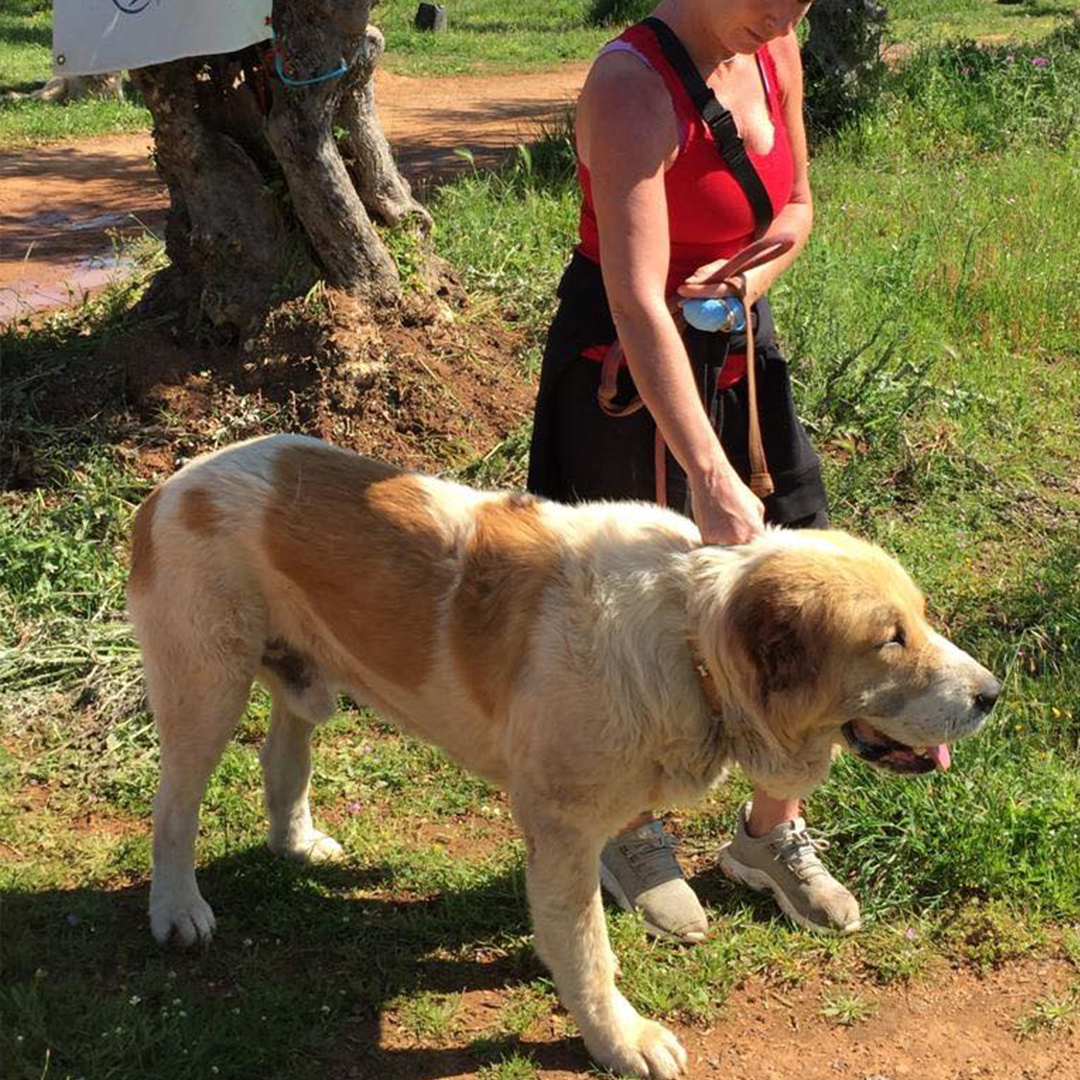 Sponsor a dog at DASH, a dog shelter in Greece - Sponsor Baron today!