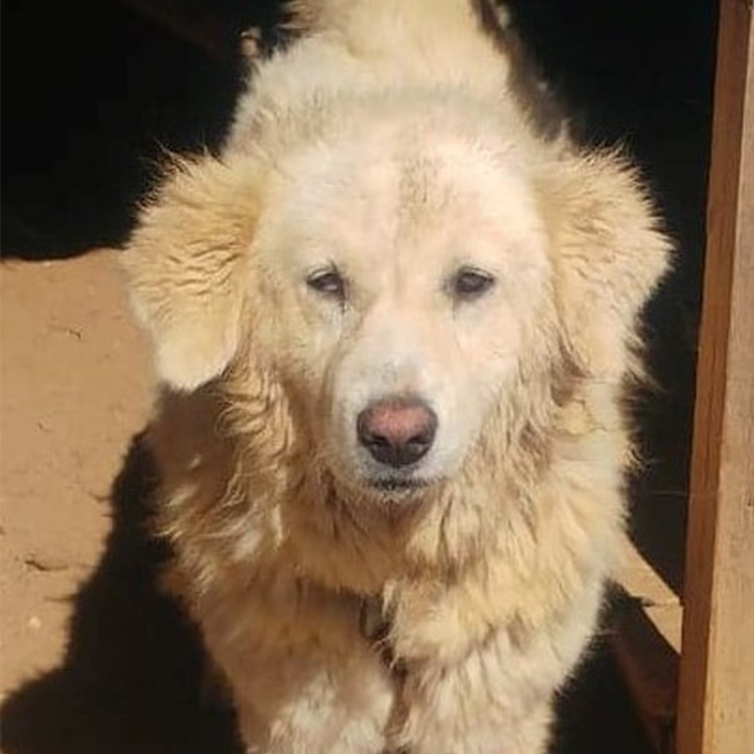 Sponsor a dog at DASH, a dog shelter in Greece - Sponsor Daisy today!