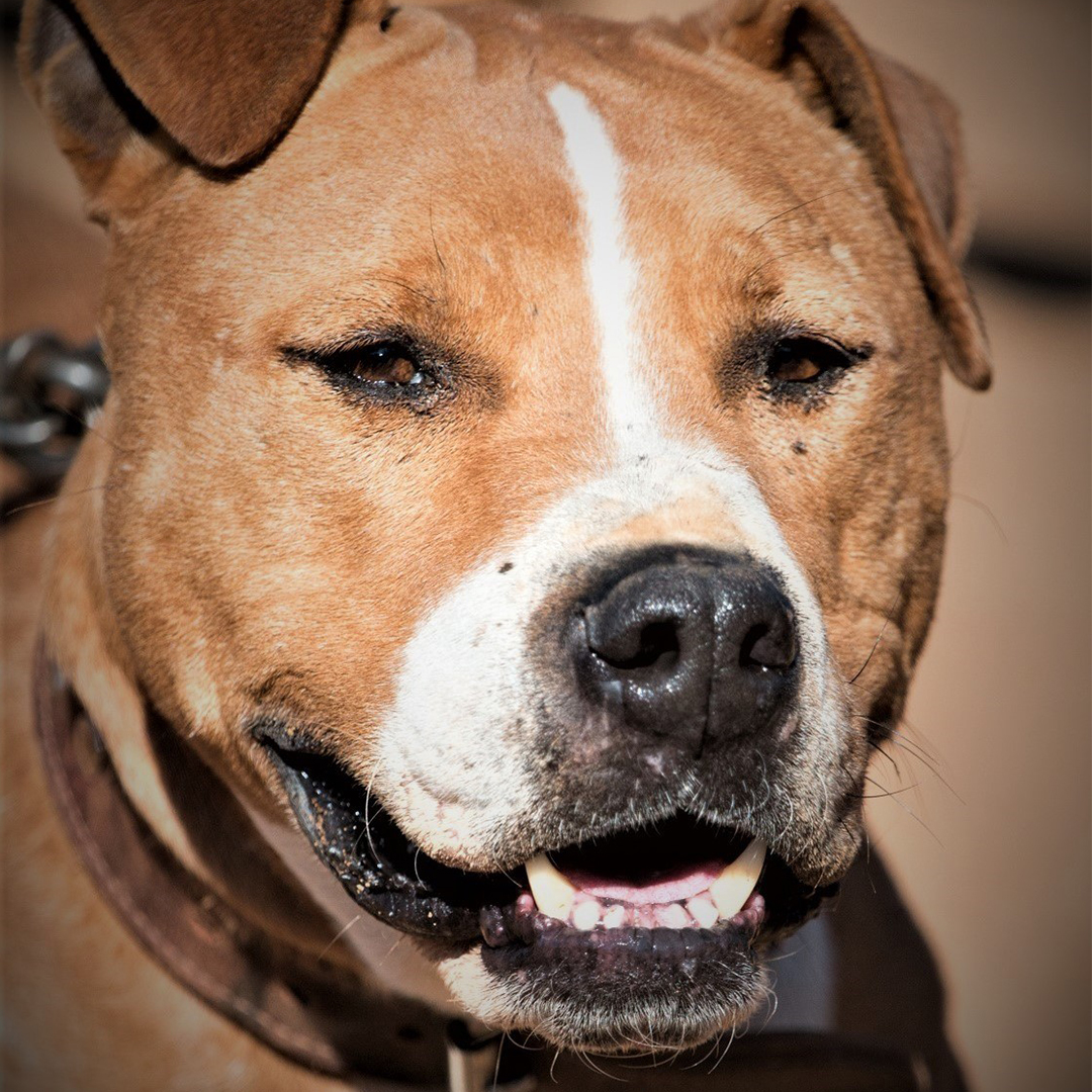 Sponsor a dog at DASH, a dog shelter in Greece - Sponsor George today!