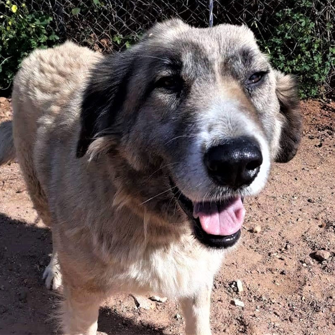 Sponsor a dog at DASH, a dog shelter in Greece - Sponsor Melodie today!