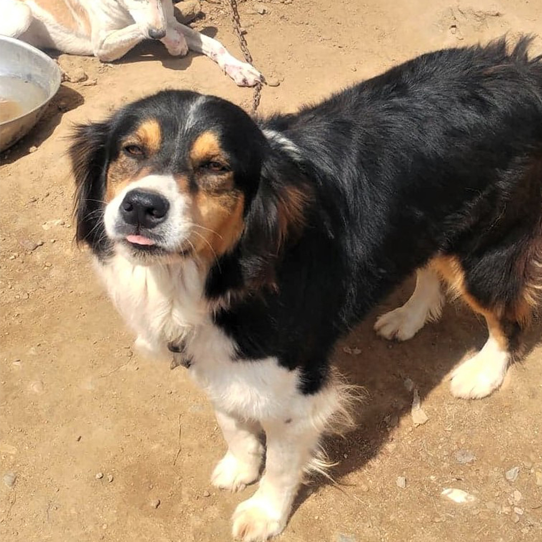 Sponsor a dog at DASH, a dog shelter in Greece - Sponsor Sita today!