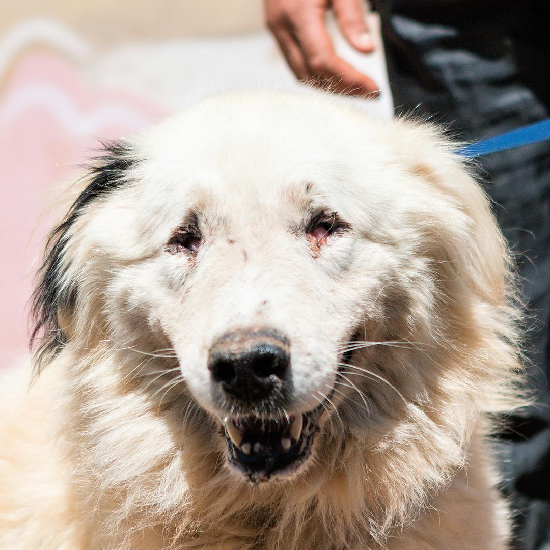 Sponsor a dog at DASH, a dog shelter in Greece - Sponsor Stevie today!