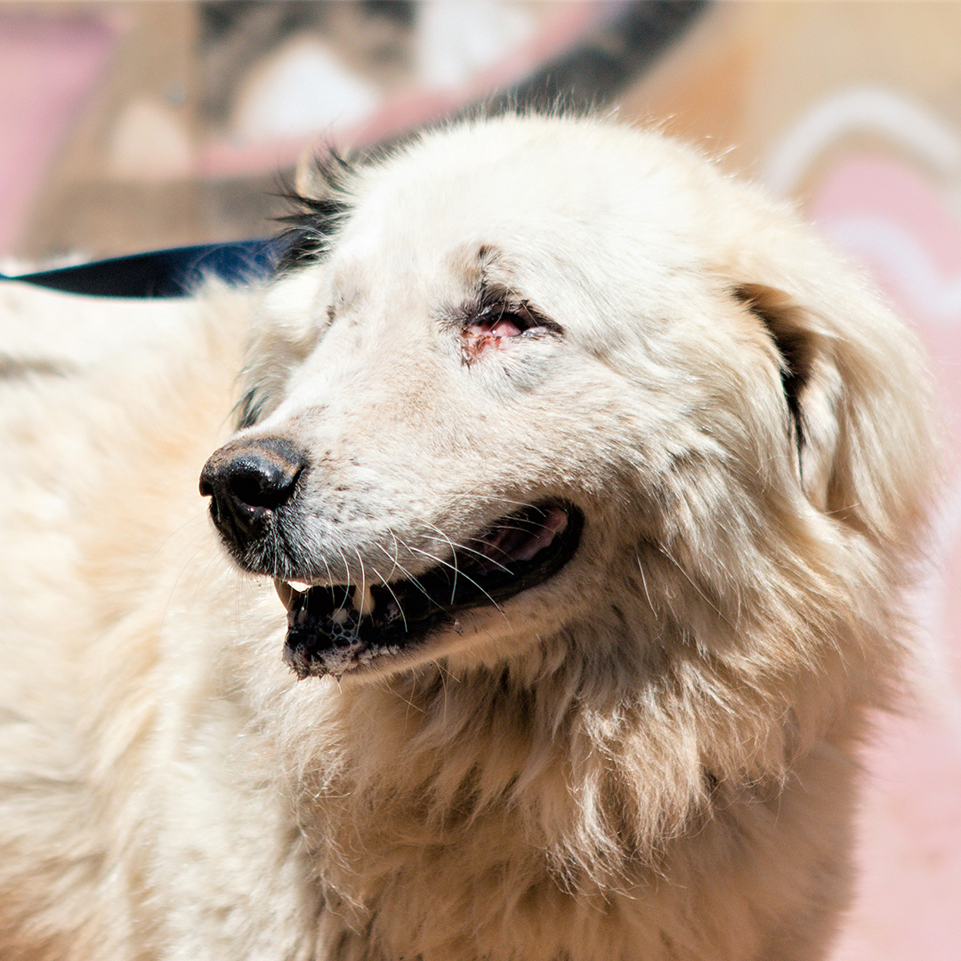 Sponsor a dog at DASH, a dog shelter in Greece - Sponsor Stevie today!