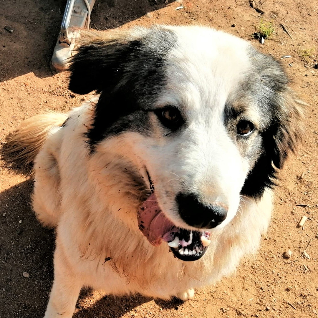 Sponsor a dog at DASH, a dog shelter in Greece - Sponsor Tommy today!