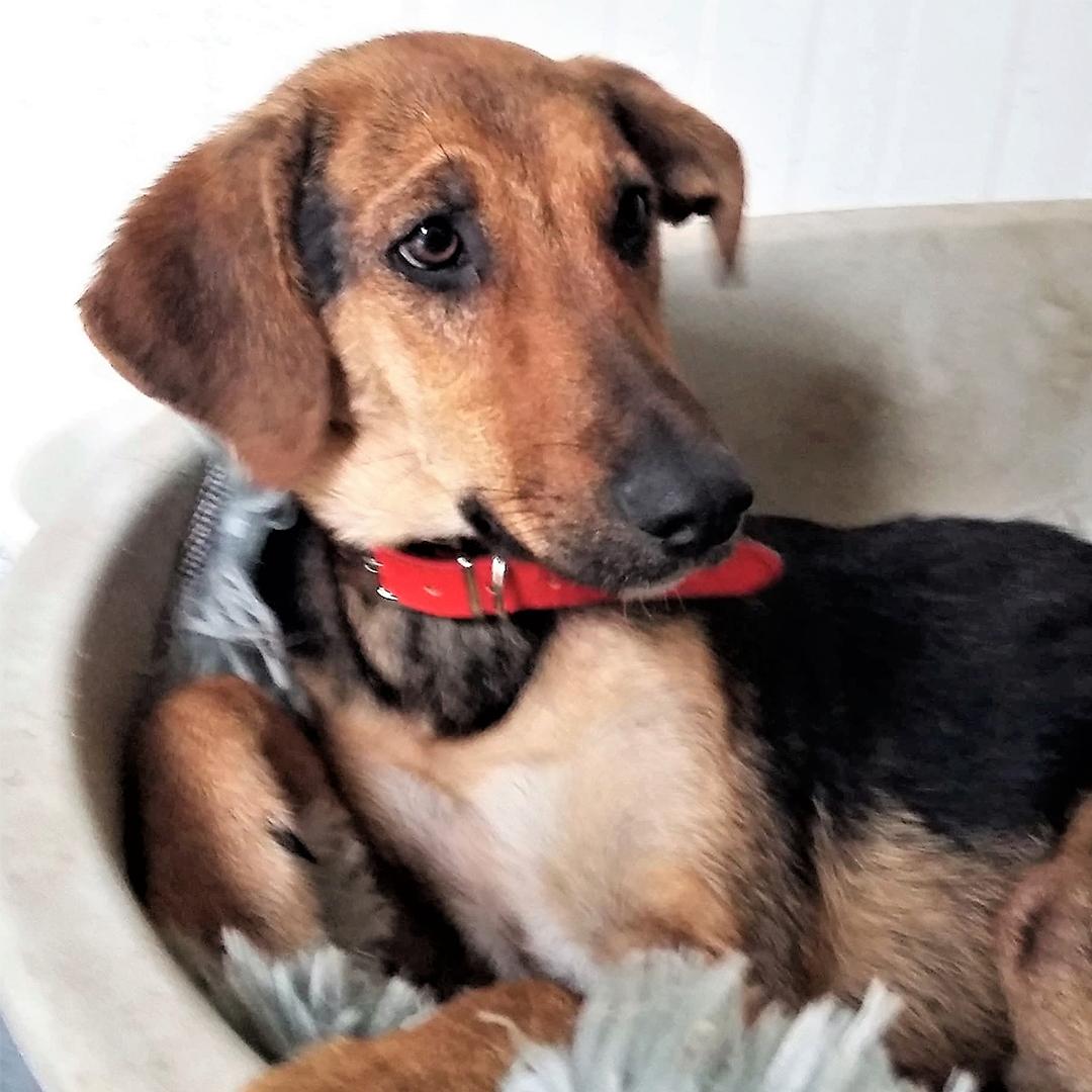 Sponsor a dog at DASH, a dog shelter in Greece - Sponsor Velika today!