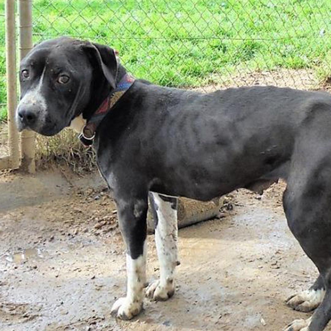 Sponsor a dog at DASH, a dog shelter in Greece - Sponsor Flora today!