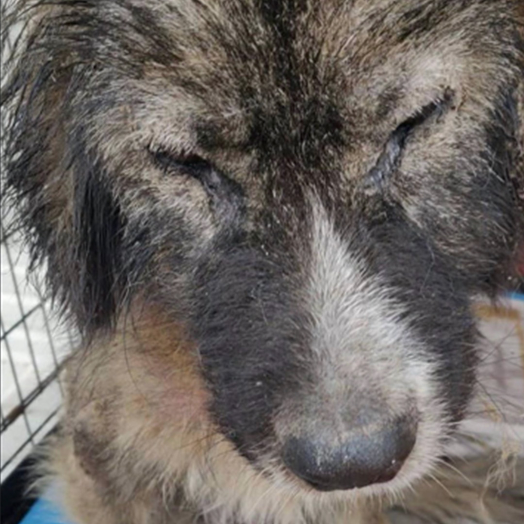 Sponsor a dog at DASH, a dog shelter in Greece - Sponsor Gracie today!