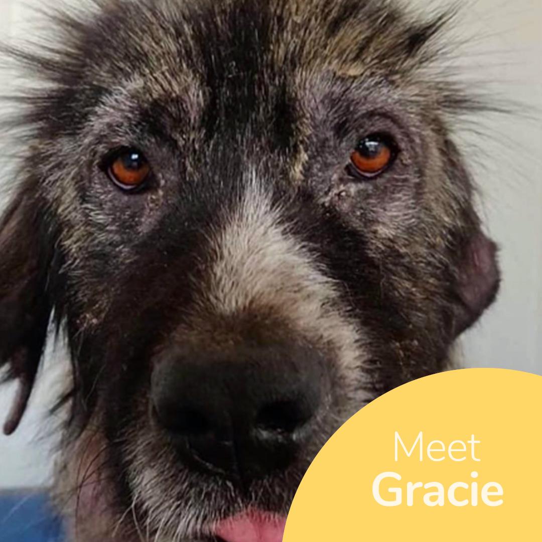 Sponsor a dog at DASH, a dog shelter in Greece - Sponsor Gracie today!