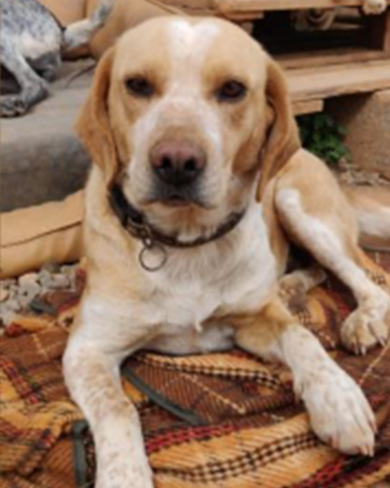 Adopt a dog at DASH, a dog shelter in Greece - Adopt Sweetheart today!