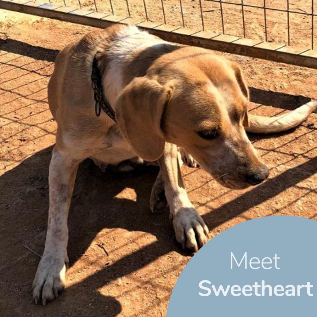 Meet Sweetheart