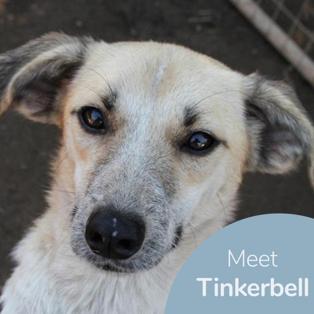 Meet Tinkerbell