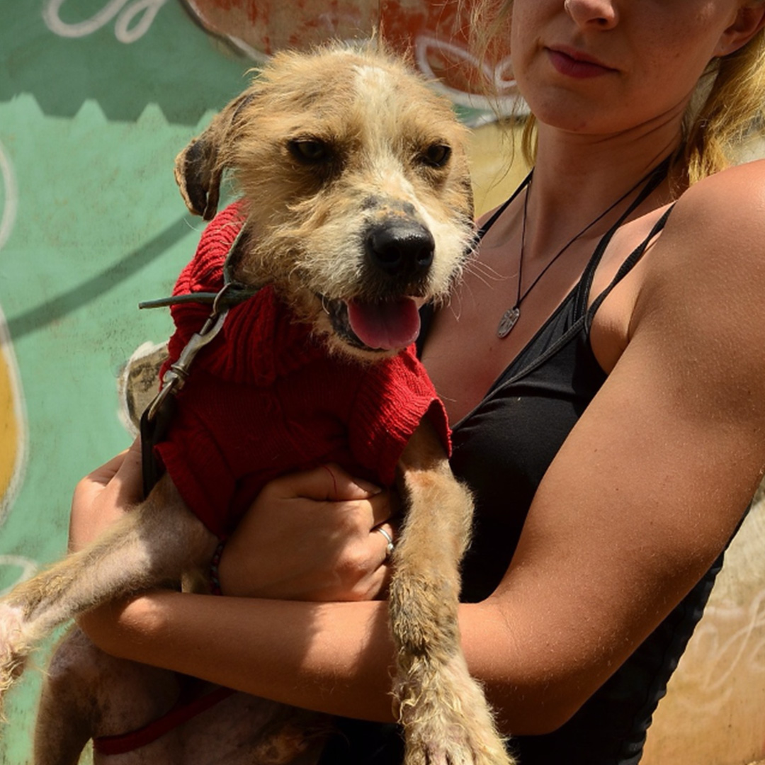 Sponsor a dog at DASH, a dog shelter in Greece - Sponsor Tipsy today!
