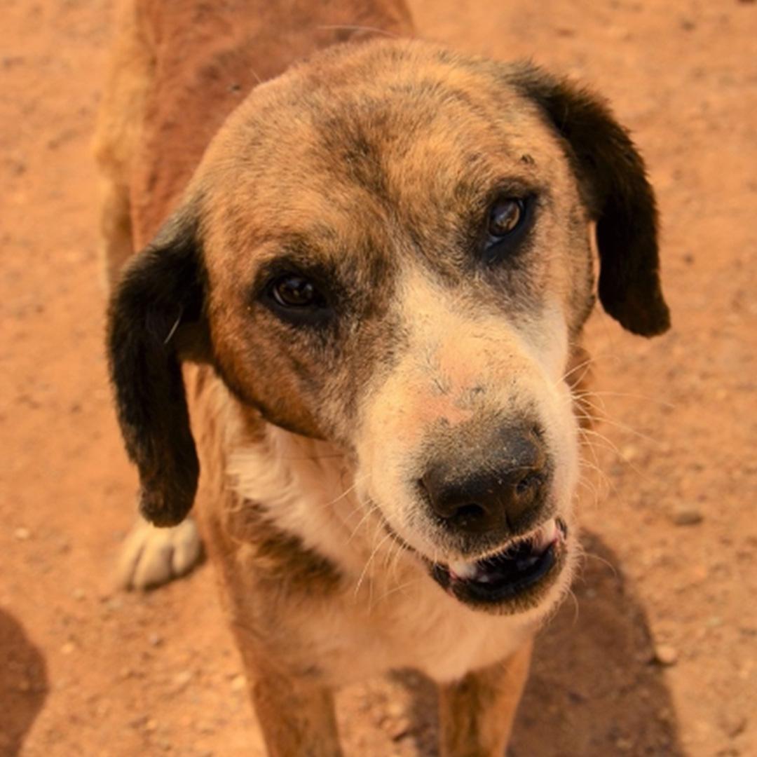 Sponsor a dog at DASH, a dog shelter in Greece - Sponsor Varios today!